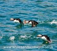 Pembrokeshire Wildlife_2