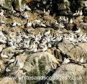 Pembrokeshire Wildlife_3