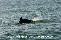 Whitesands - Coastal Wildlife_3